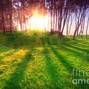 Green Park At Sunset Art Print by Michal Bednarek