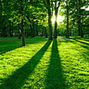 Green Park Print by Elena Elisseeva