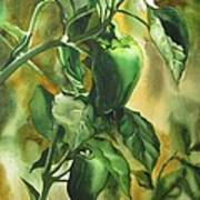 Green Peppers From Our Garden Art Print