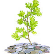 Green Plant And Money  Art Print