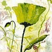 Green Poppy 003 Art Print