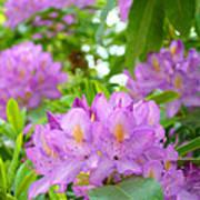 Green Rhododendron Floral Garden Pink Purple Art Prints Art Print