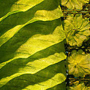 Green Silk 02 Art Print