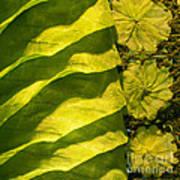 Green Silk 03 Art Print