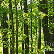 Green Spring Forest Art Print