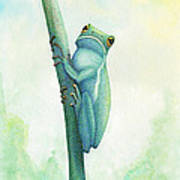 Green Tree Frog Art Print by Wayne Hardee