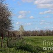 Green Wheat Field With Blue Sky Art Print by Robert D  Brozek