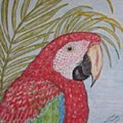 Green Winged Macaw Art Print