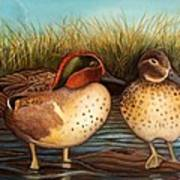 Green Winged Teal Art Print