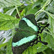 Green Wings 2 Art Print