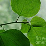 Green Zen Art Print