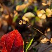 Greenbriar Leaf And Wintergreen Seedpod Art Print