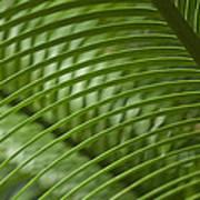 Greens I Art Print