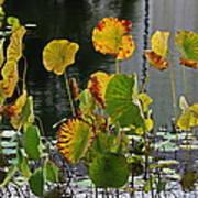 Greens On A Pond Art Print