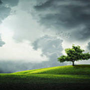 Grey Clouds Over Field With Tree Art Print