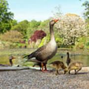 Grey Geese And Goslings Art Print