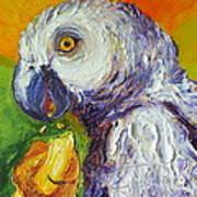 Grey Parrot And Juicy Mango Print by Paris Wyatt Llanso