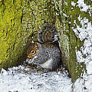 Grey Squirrel With Its Food Store Art Print