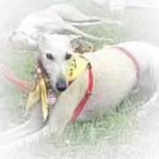 Greyhound Rescue 7 Art Print by Jackie Bodnar