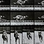 Greyhound Running Art Print