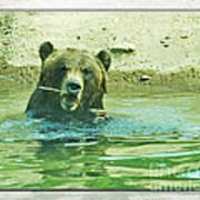 Grizzly Bath Art Print