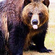 Grizzly Bear 1 Art Print