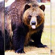 Grizzly Bear 2 Art Print