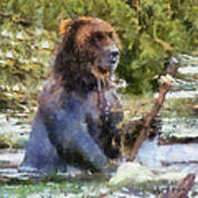 Grizzly Bear Photo Art 02 Art Print