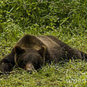 Grizzly Cub  #0863 Art Print