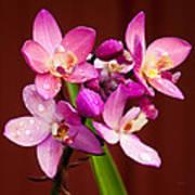 Ground Orchid Art Print