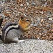 Ground Squirrel Art Print