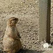 Groundhog With Shadow Art Print