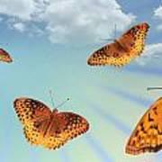 Group Of Butterflies And Sky Art Print