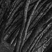 Grove Of Trees In Muir Woods Art Print