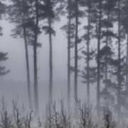 Growing In The Fog Art Print
