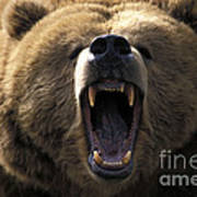 Growling Grizzly Bear Art Print by Mark Newman