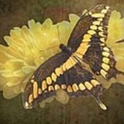 Grunge Giant Swallowtail-1 Art Print