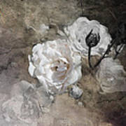 Grunge White Rose Art Print