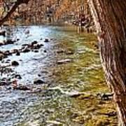 Guadalupe River View Art Print
