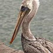 Guardian Pelican Art Print