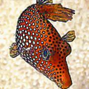 Guinea Fowl Puffer Fish Art Print
