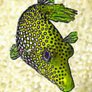 Guinea Fowl Puffer Fish In Green Art Print