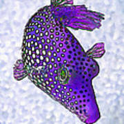 Guinea Fowl Puffer Fish In Purple Art Print