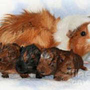 Guinea Pig Family Art Print