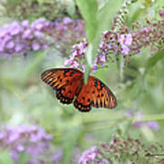 Gulf Fritillary Agraulis Vanillae-featured In Nature Photography-wildlife-newbies-comf Art Groups  Art Print