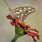 Gulf Fritillary Butterfly Art Print