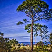Gulf Pines Art Print