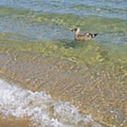 Gull Floating Art Print