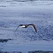 Gull Flying Over Water Art Print