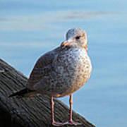 Gull On The Pier Art Print